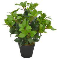 vidaXL Tekokasvi laakeripuu ruukulla vihreä 40 cm